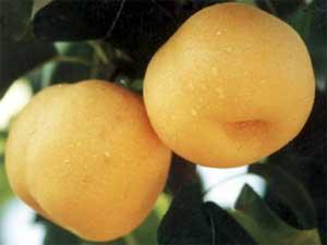 软儿梨的主要营养成分