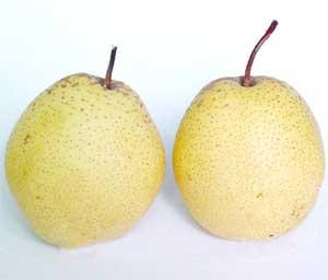 雪花梨的主要营养成分